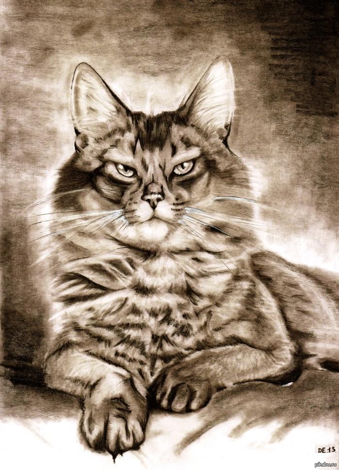 Рисунок мужик с котом