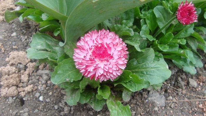 Вот такие цветы растут в Никитском ботаническом саду