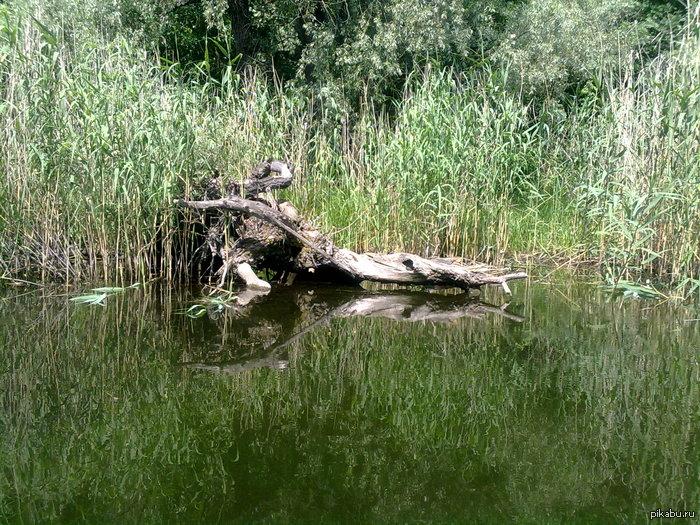 Днепровские пейзажи