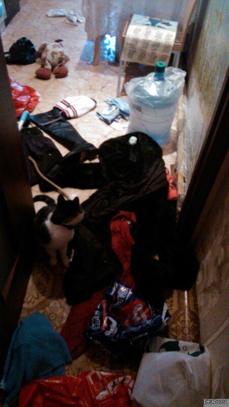 Когда остался дома один с котом