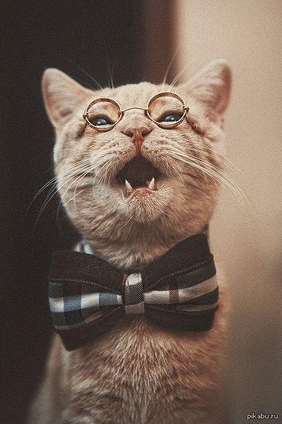Коты интеллигенты
