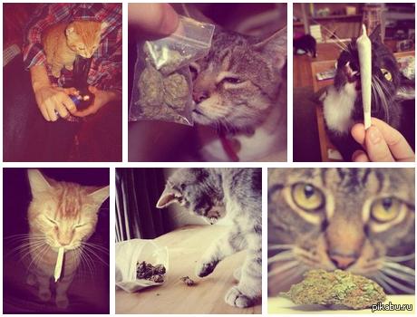 Подборка фото котов
