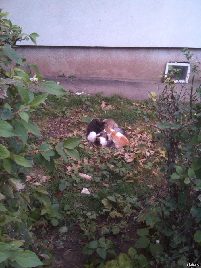 Котейки , дружба Где то в грядках ,подворотнях ,грелась кучка котеек  в туманный день  :)