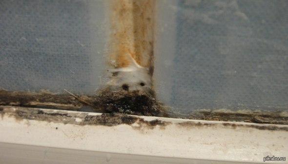 у моей ванне завелась мини панда ^_^
