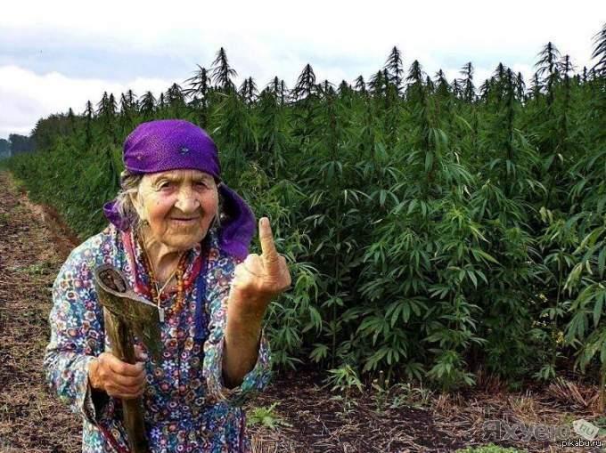 При обысках в Херсонской области изъято 22 кг марихуаны на 4 млн гривен - Цензор.НЕТ 3116