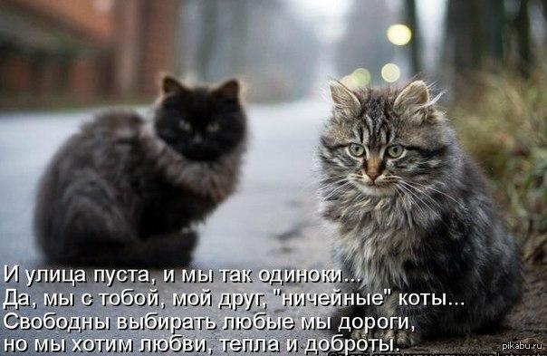 Бездомного кота стихи