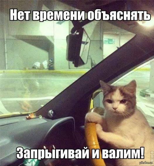 Нет времени объяснять кот