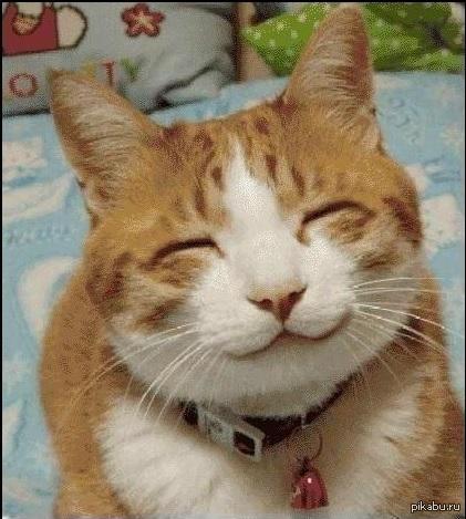 Кот смайлик картинка