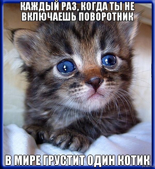 Открытка дню, картинки грустные котята с надписями