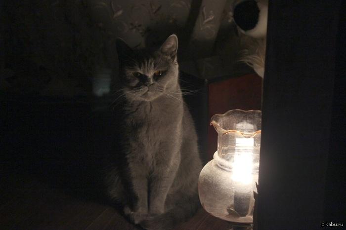 Настало время ох*ительных историй, моя кошка чуть темно вышло, в каментах оригинал, руки у меня из жопы, как смог осветлил(