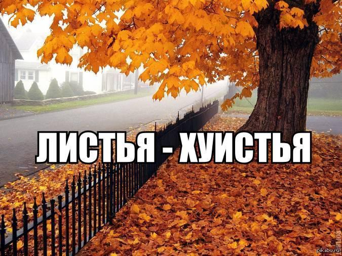 для картинка с приколами про осень получила лучшие качества