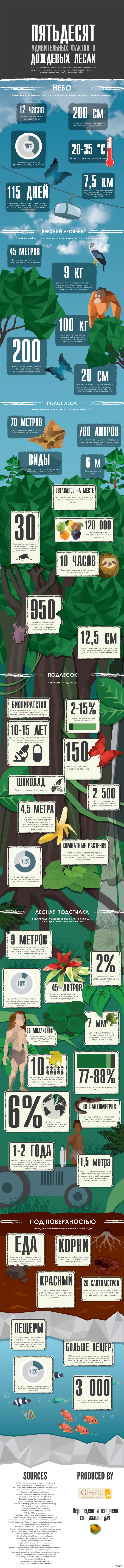 50 удивительных фактов о тропических дождевых лесах очень длиннопост 2