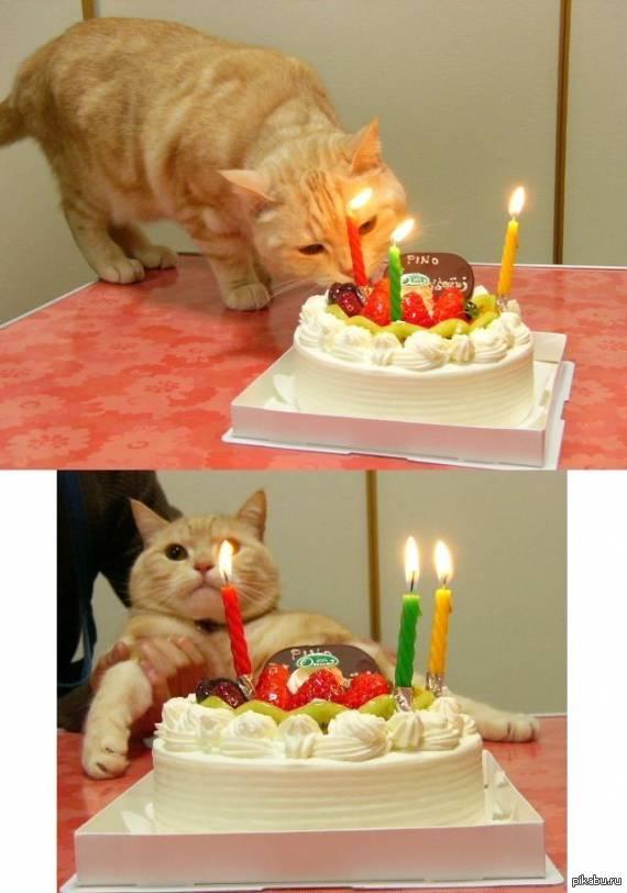 У меня сегодня день рождения картинки с котами, днем рождения картинках