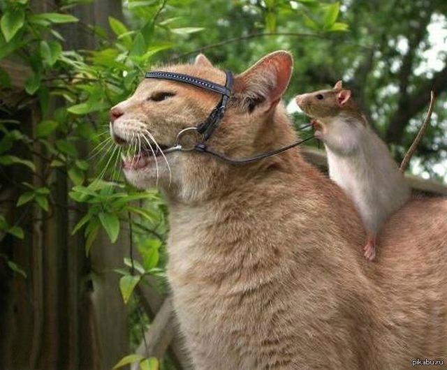 Прикольные картинки коты с мышами, главе открытки целую