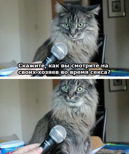 секс с котами
