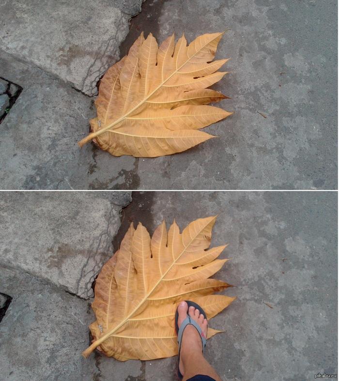 Просто листок. Обычный осенний листок.