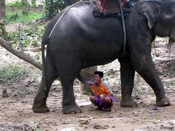 Elephant to girl xxx — photo 7