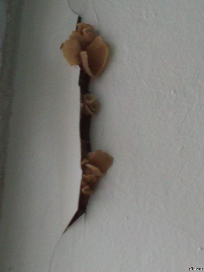 Грибочки Вот такие вот грибочки росли на окне одной из школ Омска... Вкусняшка)