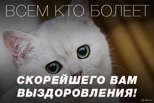 https://cs.pikabu.ru/post_img/2013/11/30/0/1385755578_1017942632.png