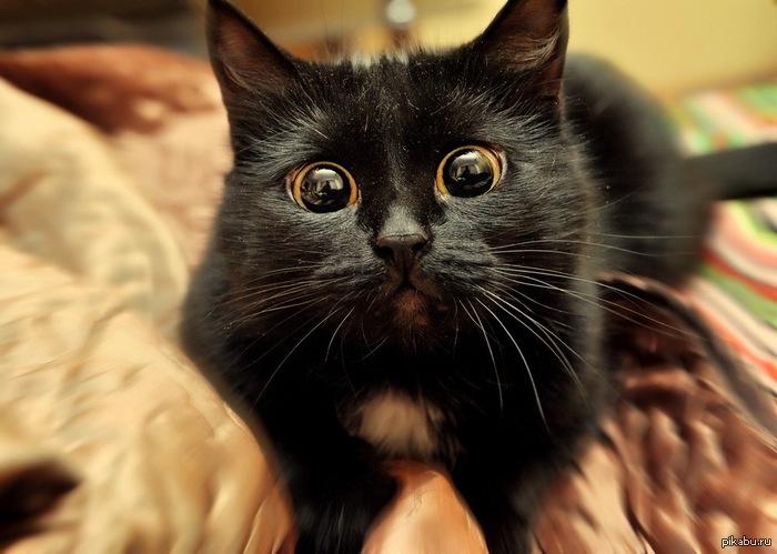 Взгляд кота фото