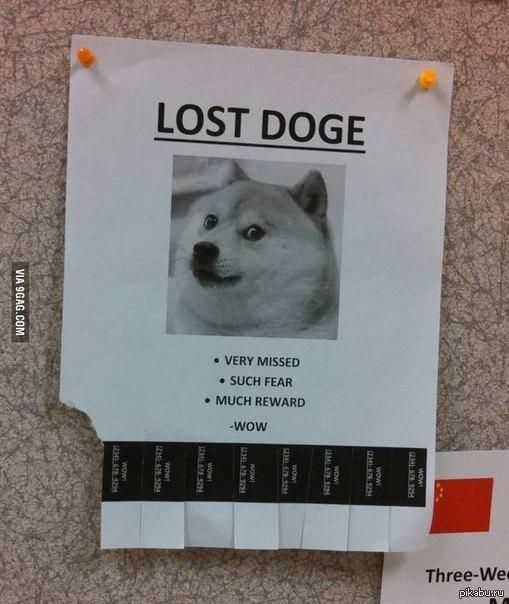 Lost doge Спи, жена