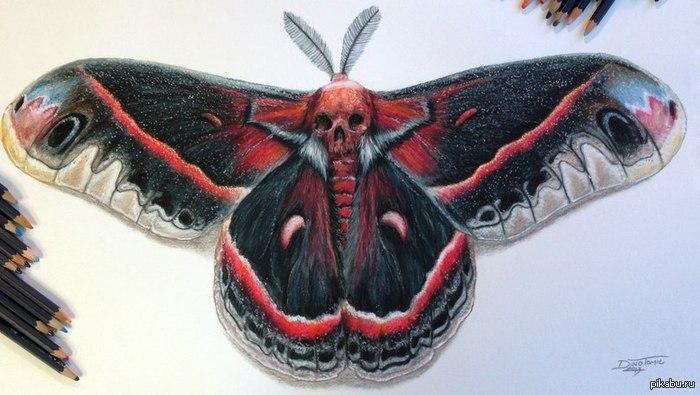 БабоОчка! Очень неординарное изображение бабочки...(На самом деле существует множество трактовок что предвещают бабочки с рисунком черепа на спине)