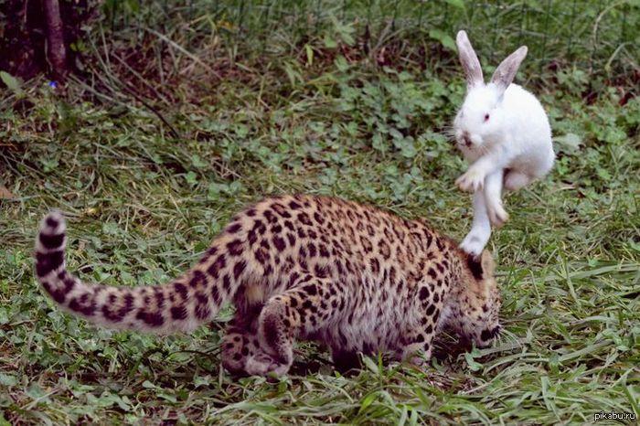 Заяц-убиваяц Никогда не недооценивайте противника