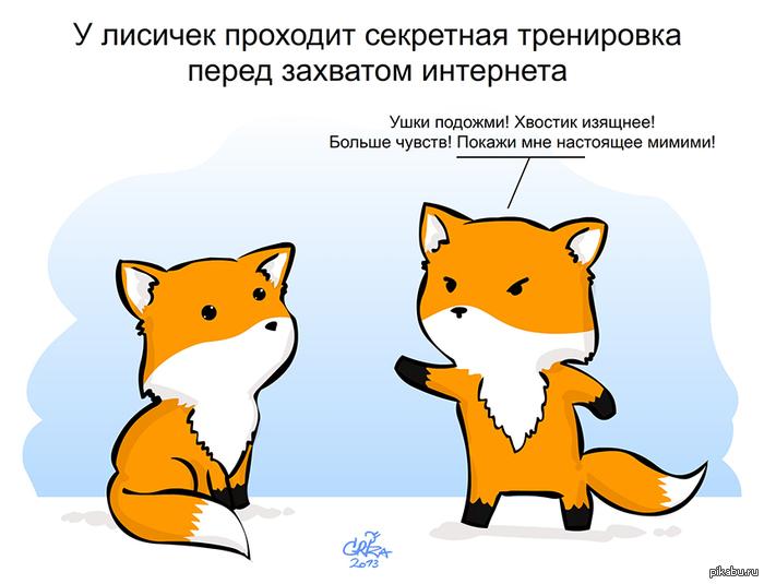 милые лисички картинки
