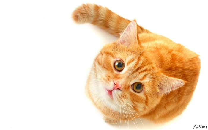 food for cats with crystals in their urine