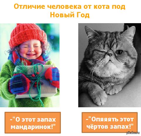 Отличие человека от кота под Новый Год *С наступающим :)*