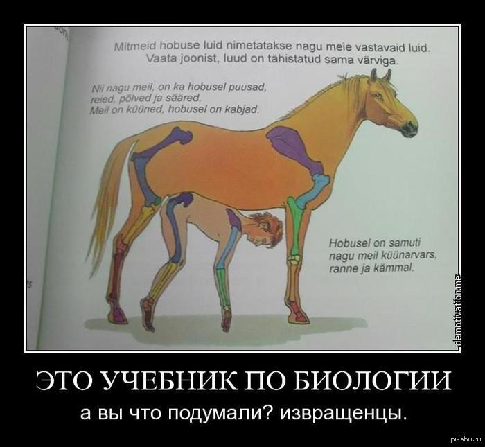 Как конь трахает женщины