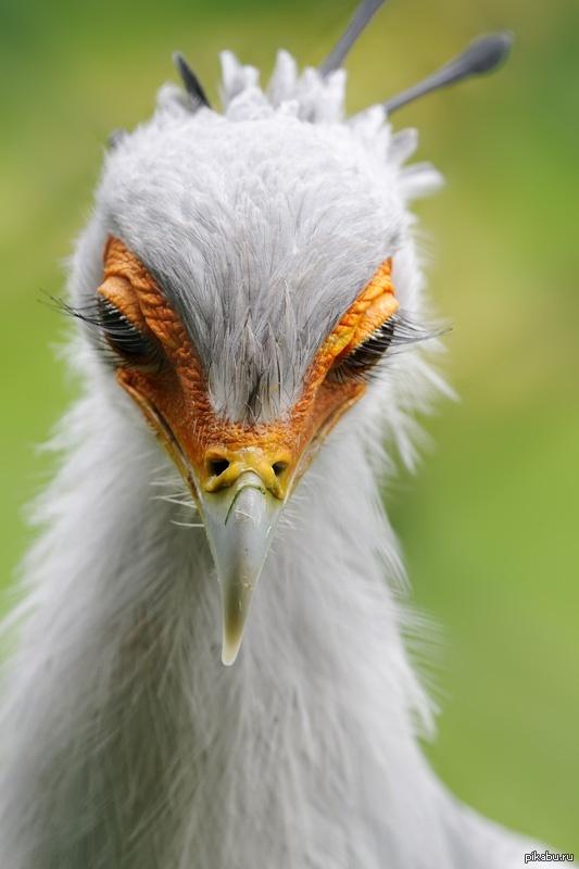птица с ресницами фото великого