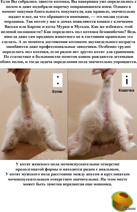 Как отличить котенка от кота или кошки