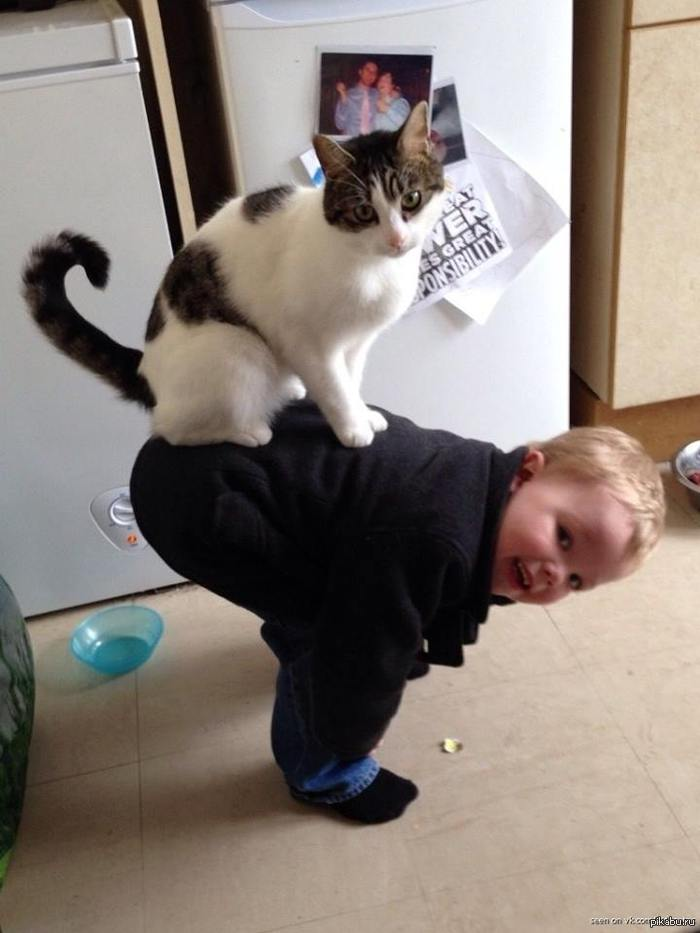 10 scientific benefits of being a cat owner