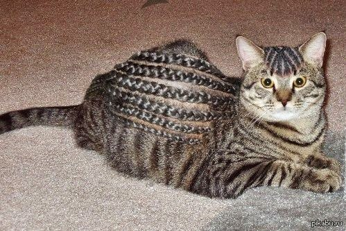Female tiger striped kitten names