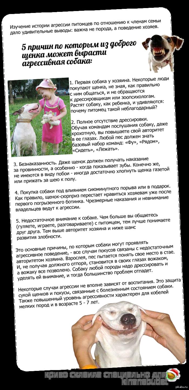 """Только от жизни собачьей собака бывает кусачей... Почему собаки нападают на своих хозяев? Как оказывается, дело совсем не в породе - владельцев кусают и дворняжки, и собаки мини-пород, а не только """"привыч"""