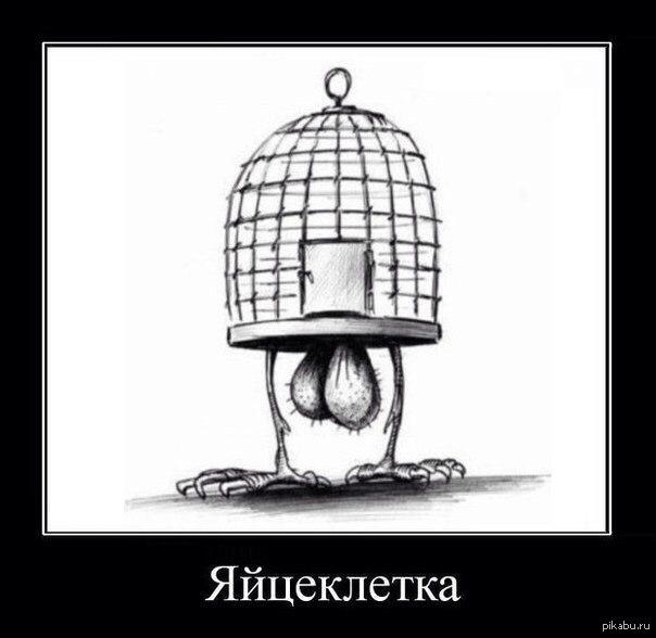 Яйцеклетка картинка прикол