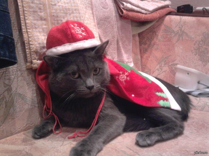 Предстароновогодний котэ. Он подозревает, но не знает наверняка.