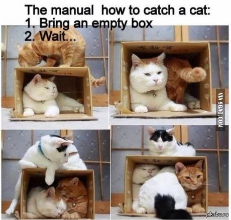 How to have a cat