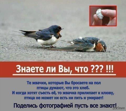 Кидайте птицам жвачку кормите бездомных котят. ну или просто бездомных
