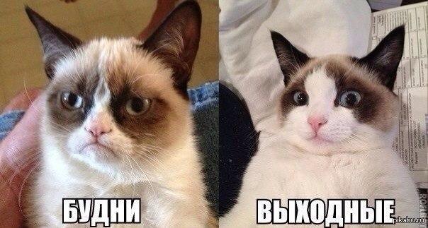 Веселый и грустный кот