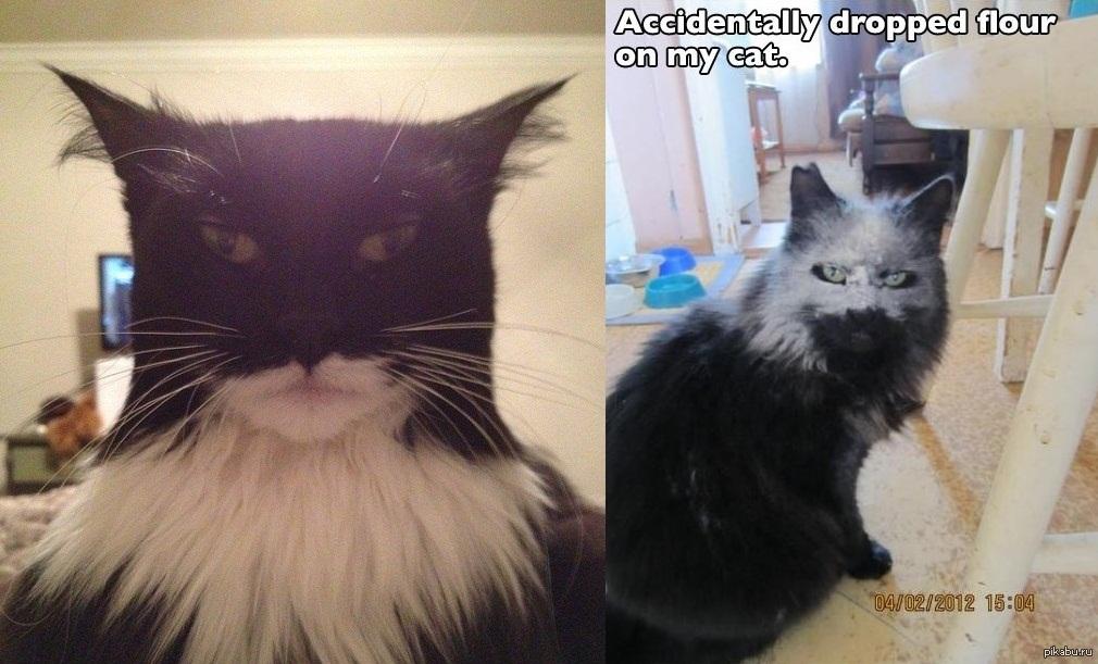 суровые коты фото