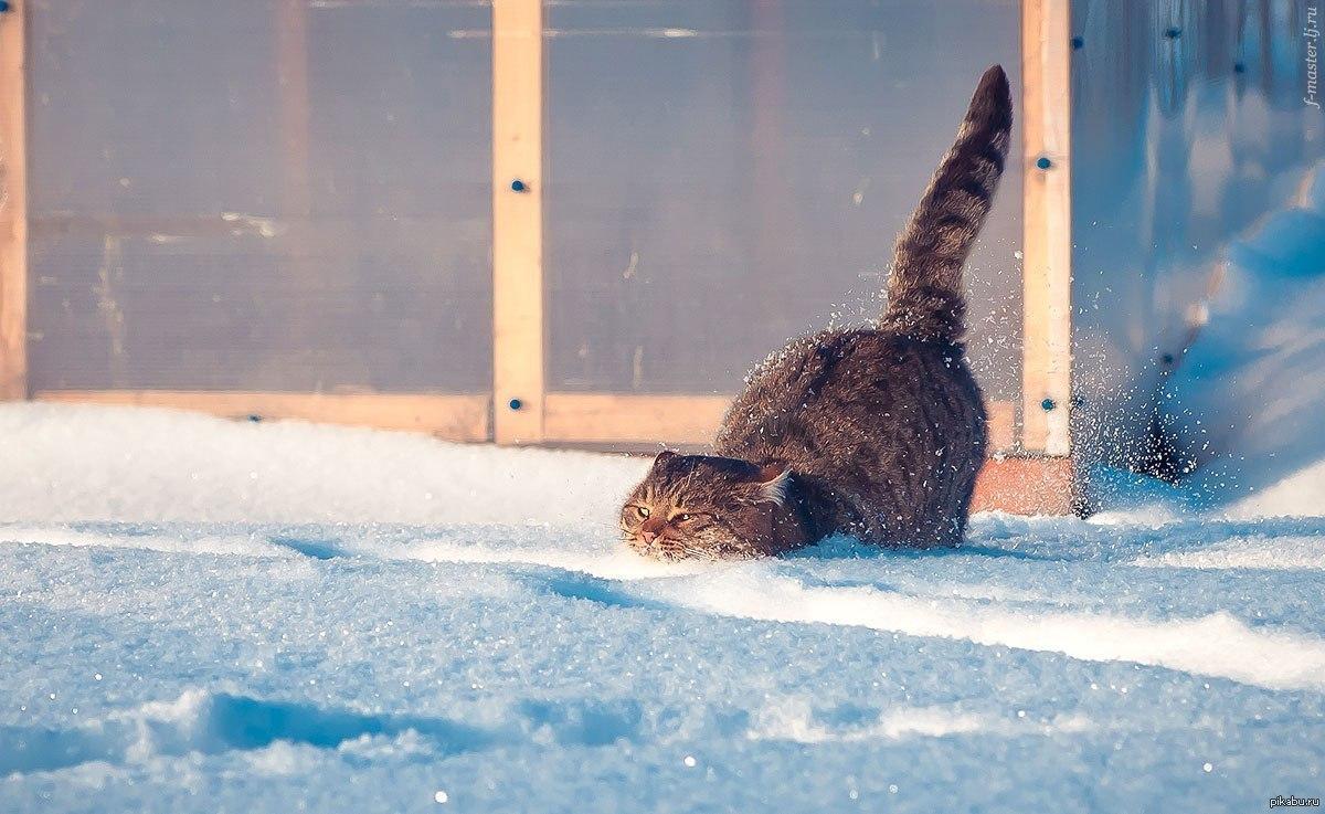 Картинки про, прикольные картинки мороз и утро снег