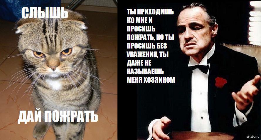 Кот крестного отца