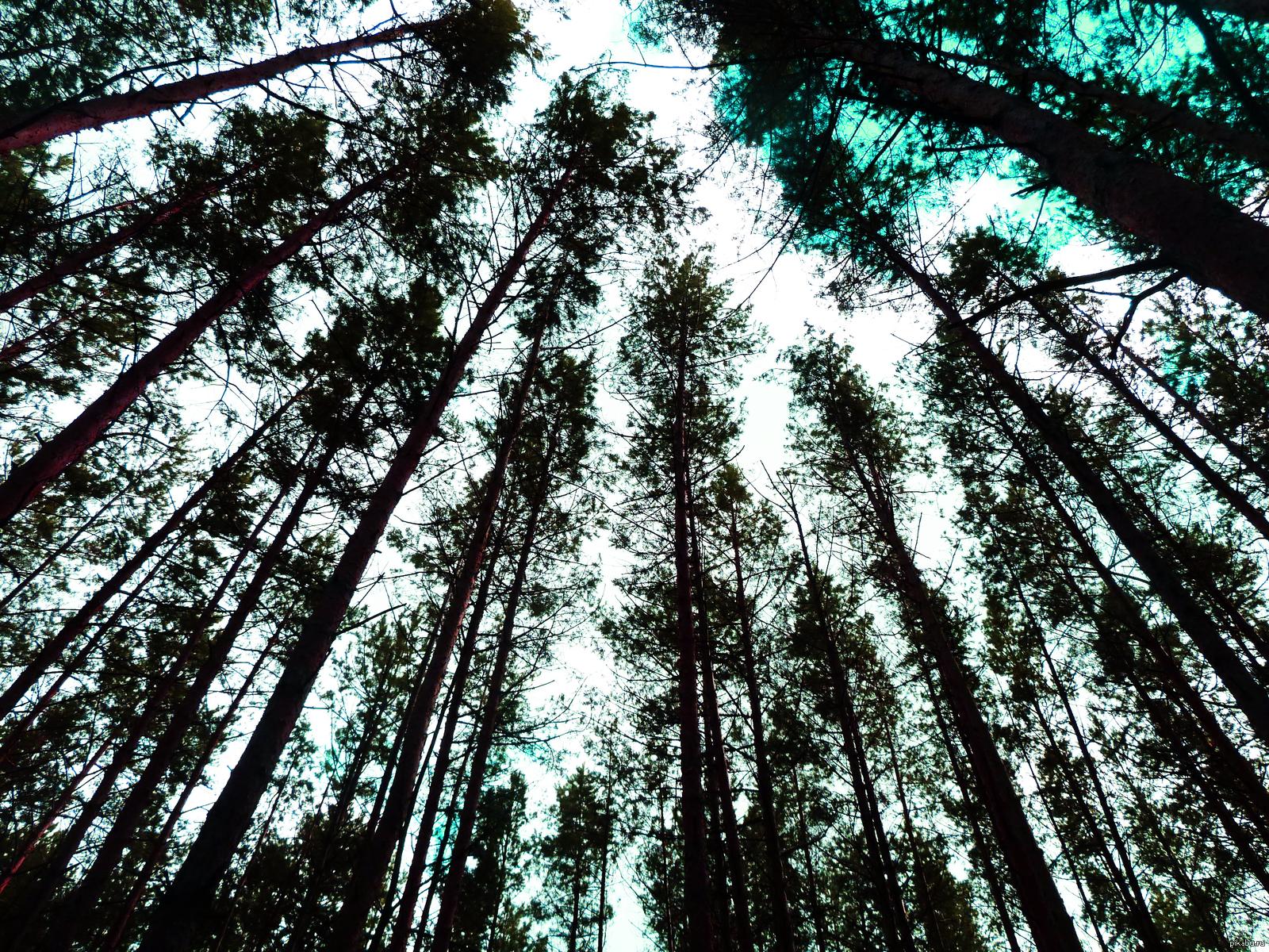 никто лес самара картинки можно наносить старые
