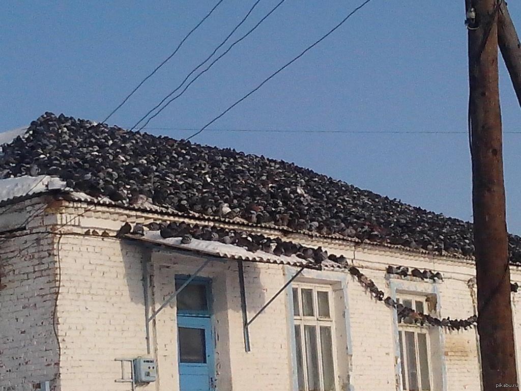 Приколы картинки на крыше, крестнику