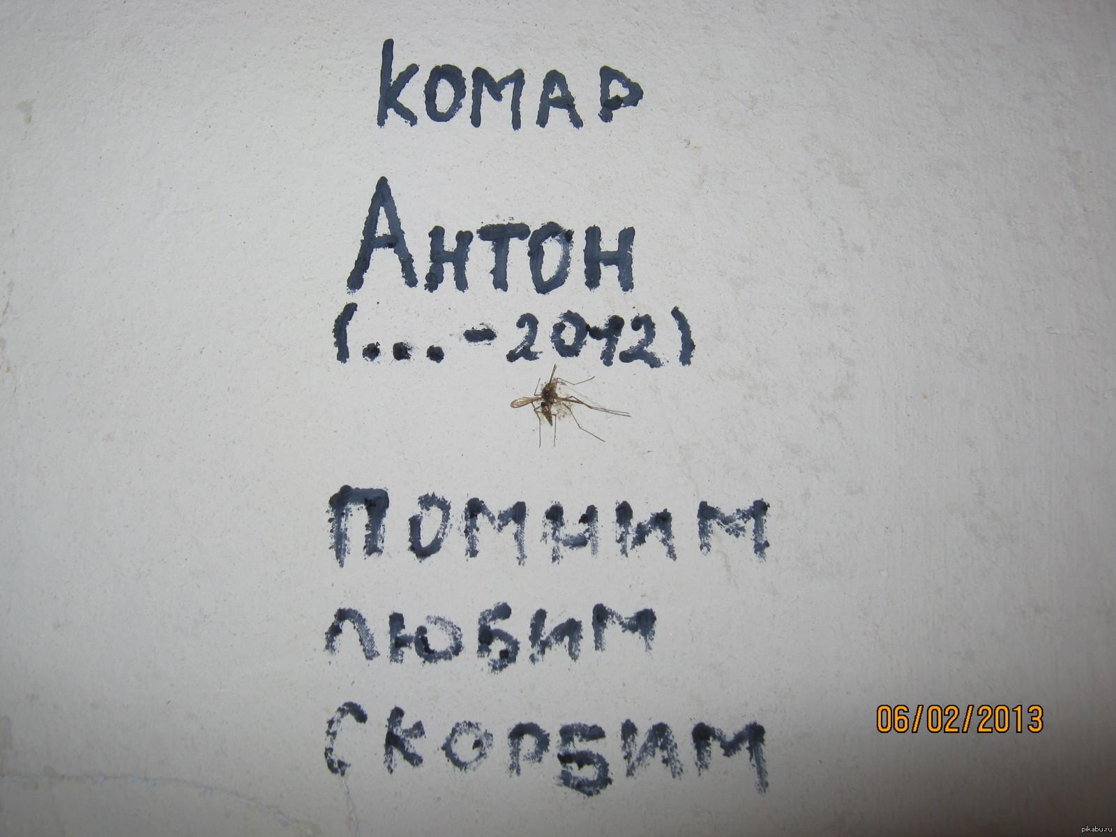 Прикольные картинки про антона, слова поддержки открытки