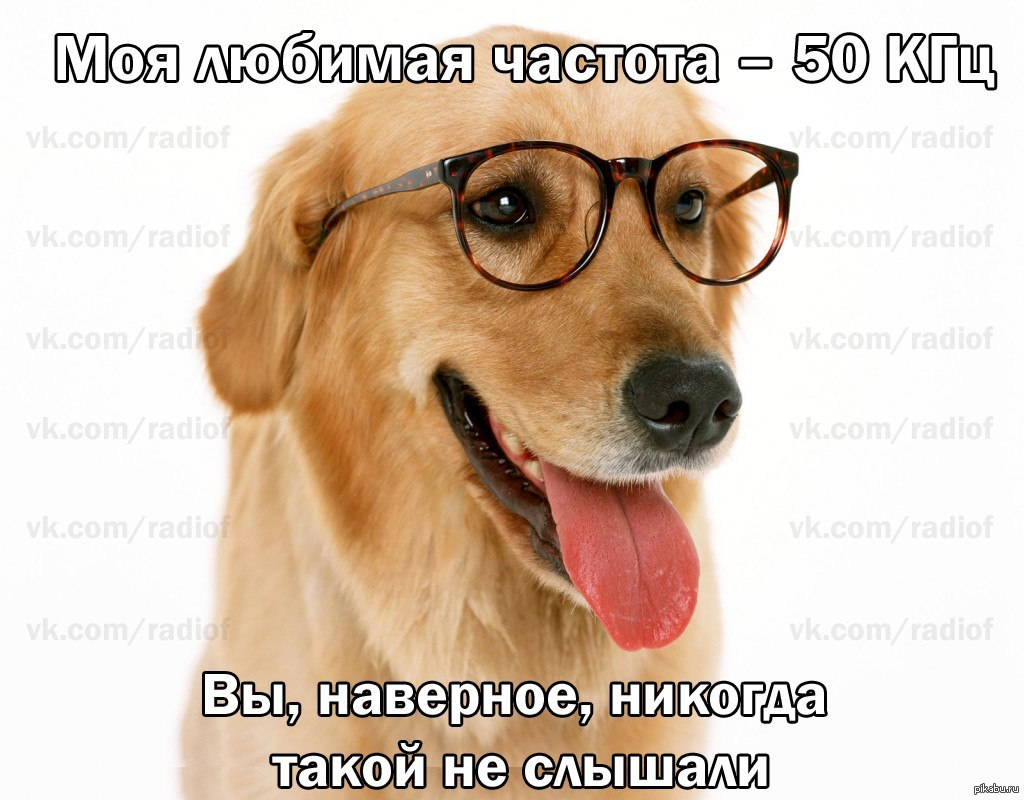 dog with glasses - HD1600×1200