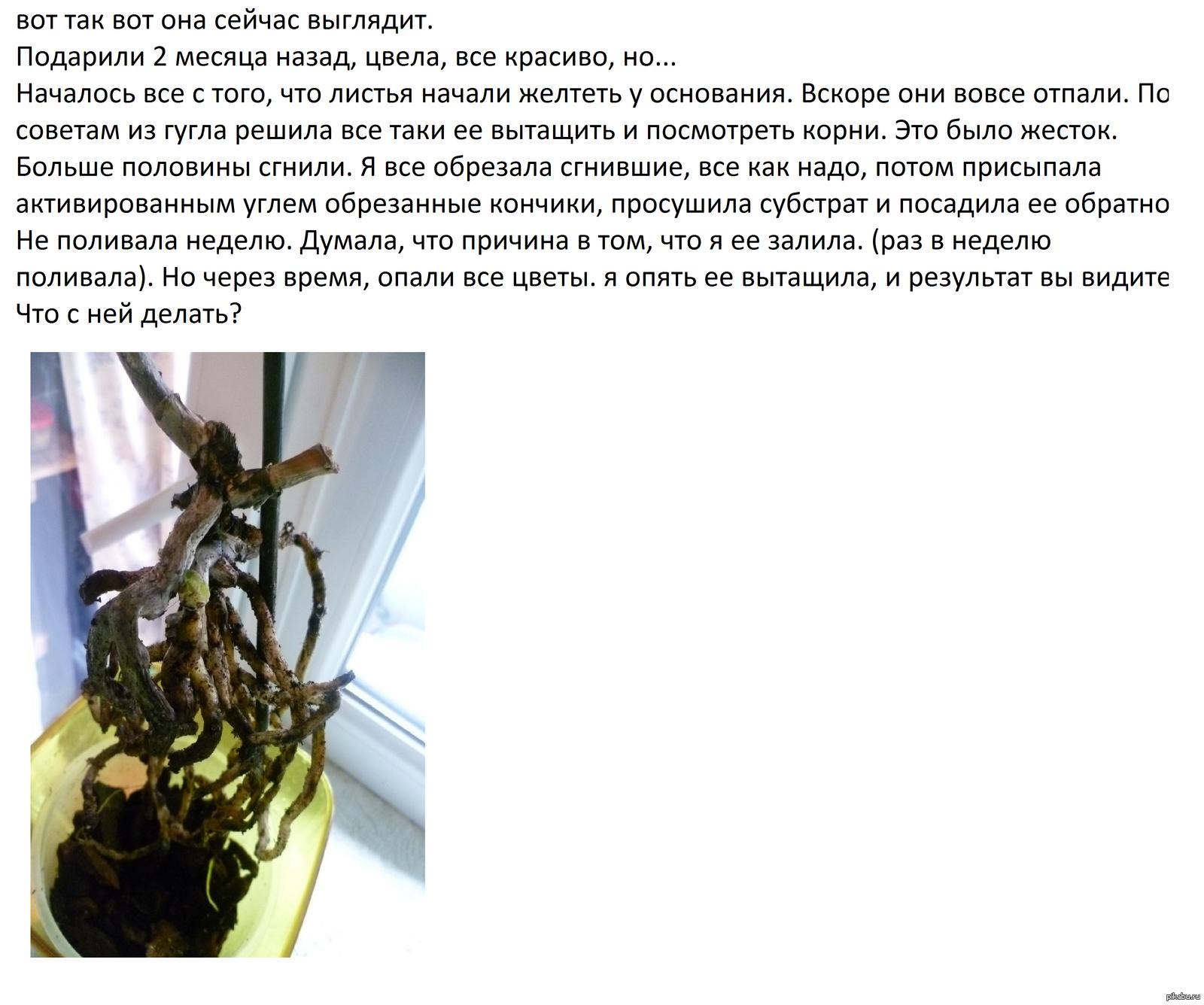 Орхидея умирает как спасти