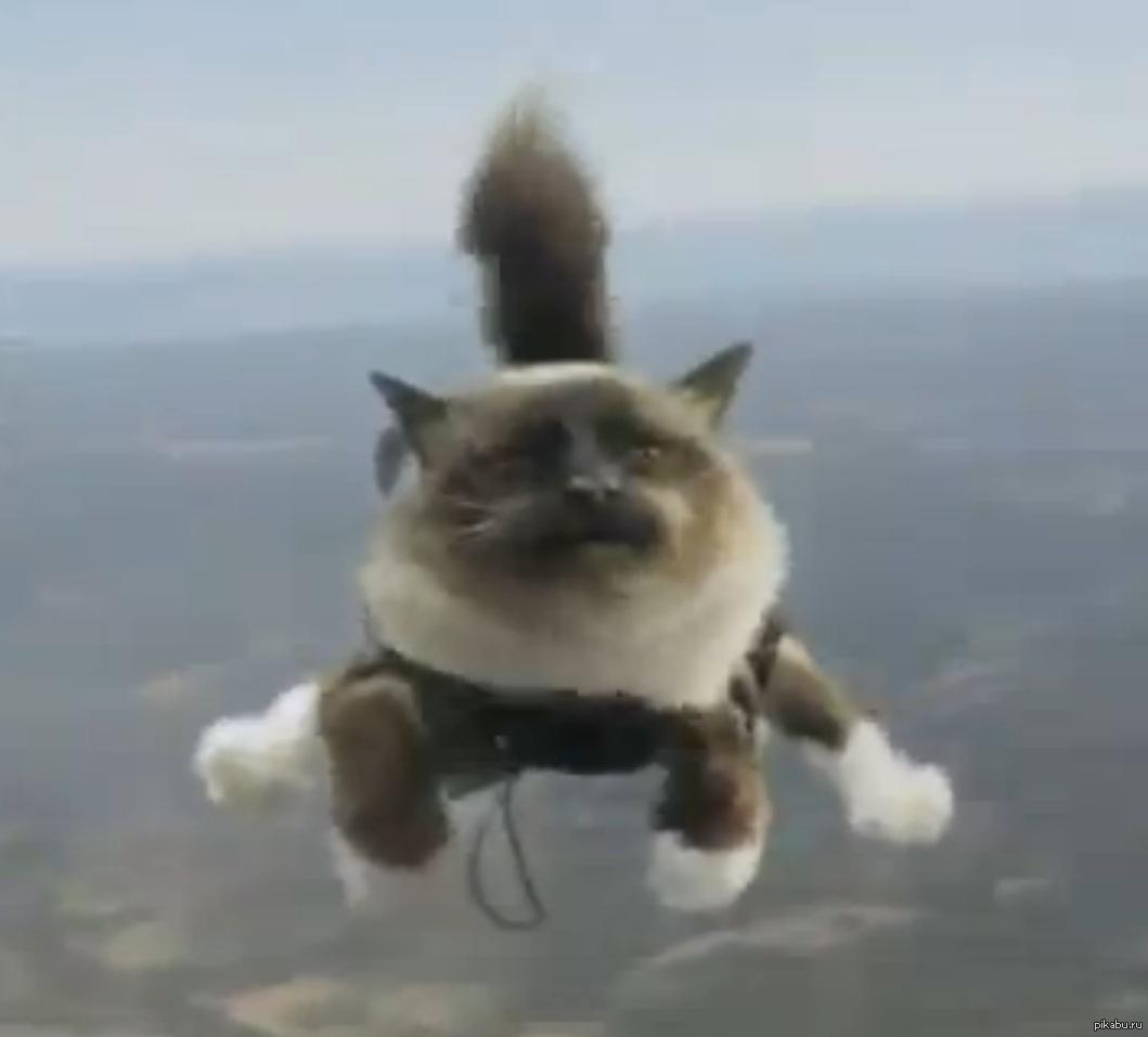 Гифка кот улетает
